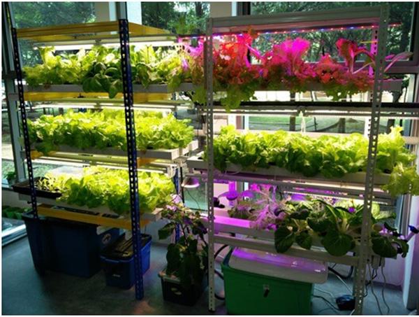Đèn led trồng rau Rạng Đông
