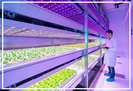 Đèn led trồng rau